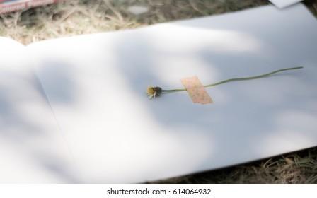 Book and Flower (Herbarium Specimen)