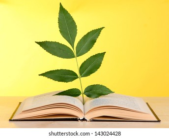 Book with plant on table on yellow background