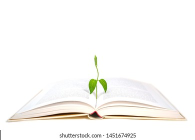 Book and plant on white background, isolated. Back to school, education, knowledge concept.