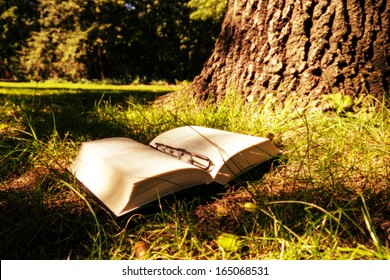 book and trunk in forest