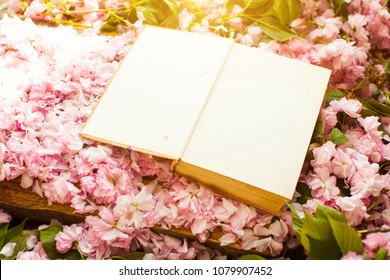 Book. White papers. Green leafs. Interesting. Stately flowering Japanese cherry. Sakura. Flowering Japanese cherry