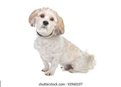 boomer dog in front of a white background