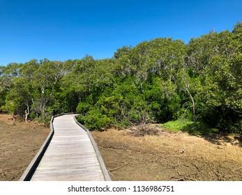 Boondall Wetlands Walk Path