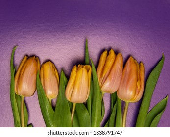 Boquet of yellow tulips on the purple background