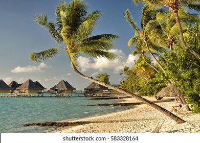 Bora Bora beach view with bent palm tree and over water bungalows
