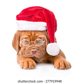 Bordeaux puppy with glasses and red santa hat. isolated on white background