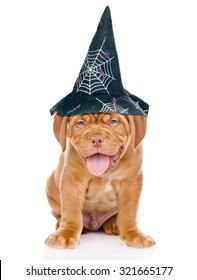 Bordeaux puppy with hat for halloween sitting in front view. isolated on white background