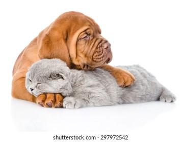 Bordeaux puppy hugs sleeping cat. isolated on white background