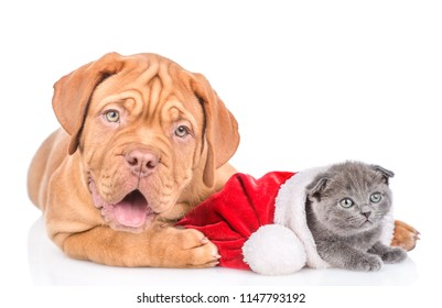 christmas puppies and kittens images stock photos vectors