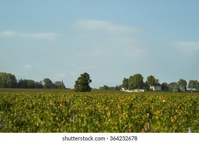 Bordeaux vignoble of Pauillac