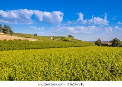 Bordeaux vineyard, Saint Emillion