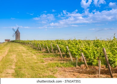 Bordeaux vineyard with Windmill