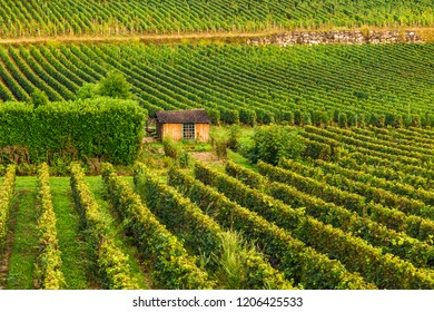 Bordeaux vineyards beautiful landscape of Saint Emilion vineyrd in France in sunny day