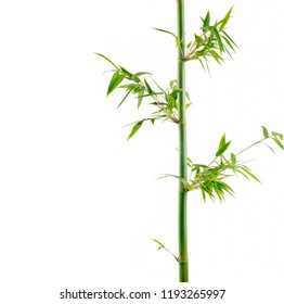 Border of bamboo stem and leaves isolated