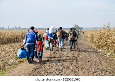 Border between Serbia and Croatia, 3 Nov 2015: Group of War Refugees walking in cornfield. Syrian refugees crossing border to reach EU. Iraqi and Afghans. Balkans Route. Migrants on their way to EU.