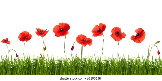 Border of blue butterflies and wild red poppies. Isolated on white background.