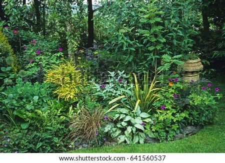 border of a bog garden in a cottage garden - Bog Garden