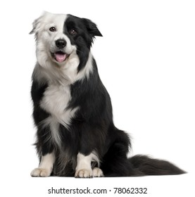 Border Collie, 8 and a half years old, sitting in front of white background