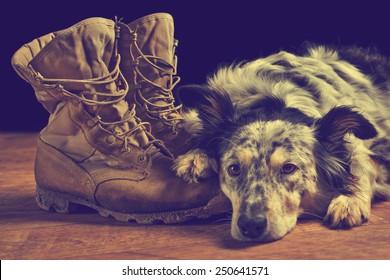 Border collie Australian shepherd dog lying on veteran military combat boots looking sad grief stricken in mourning depressed abandoned alone bereaved worried feeling heartbreak with vintage filter