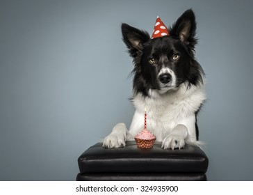 Border Collie Dog Birthday With Cake And Hat On A Blue Background