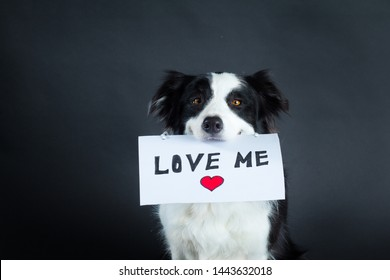 Border collie dog holding a sign in it's mouth with a lettering Love Me. Photo taken in a studio, dog sitting on a black background