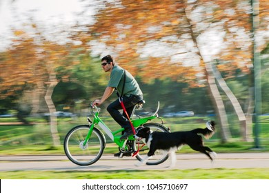 A Border Collie dog running along his cycling owner/trainer in the park on a sunny day.