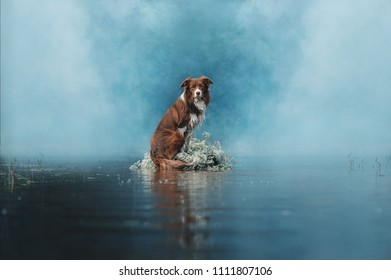 Border Collie dog is sitting in the middle of the lake surrounded by flowers and heavy white smoke