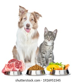 Border collie dog and tabby cat sit with varied food for pets. isolated on white background