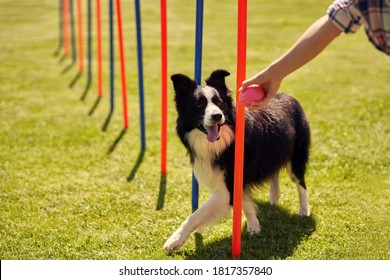Border collie dog and a woman on an agility field - Shutterstock ID 1817357840