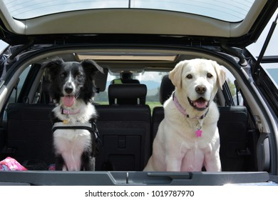 a border collie and a farmer in the trunk of a car looking from behind