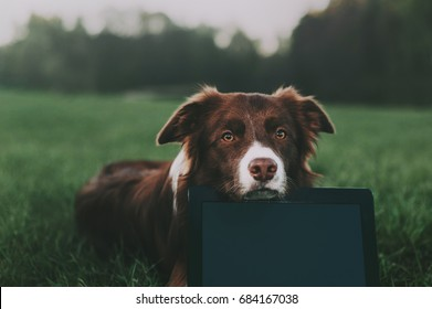 A border collie lies on the grass with a notebook