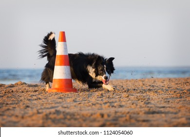 Border Collie obedience on the beach