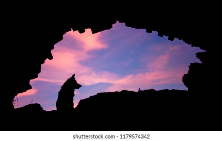 Border Collie silhouette sunset pink purple sky