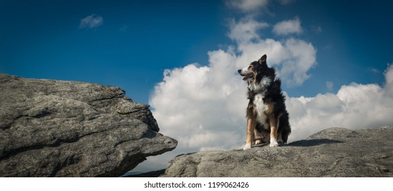 Border Collie sits on a rock and looks at the view with the sky behind him.
