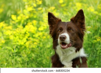 Border collie sitting on a path in the parc with green background