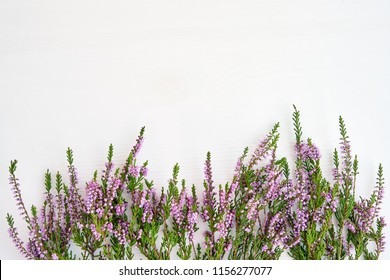 Border of common heather on white wooden background. Copy space, top view.