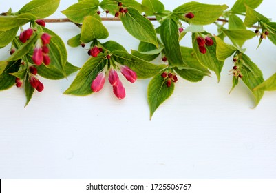 A border created with a bough of pink blossom buds and green leaves on a white wooden background . A natural frame with copy space
