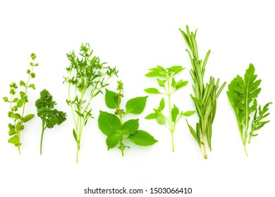Border of Different Fresh Spice Herbs isolated on white background / Basil, Chive, Majoram, Oregano, Parsley, Thyme, Rucola and Rosemary