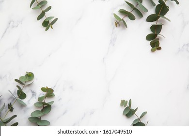 Border of eucalyptus leaves on a marble background. Lay flat