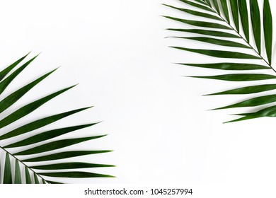 Border frame made of green leaves on a white background