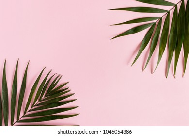 Border frame made of green leaves on a pink pastel background