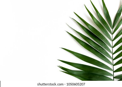 Border frame made of green leaves on a pale white background
