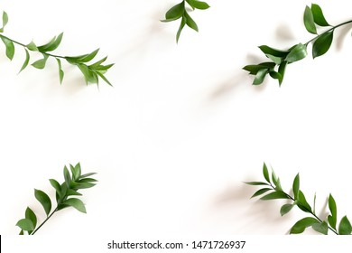 Border frame made of ruscus branches on white background