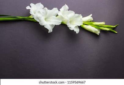 Border frame made of white gladioluses on white background. Pattern of gladiolus with space for your text, holiday greeting card. Valentine's. Flat lay, top view. Flowers texture. Frame of flowers.