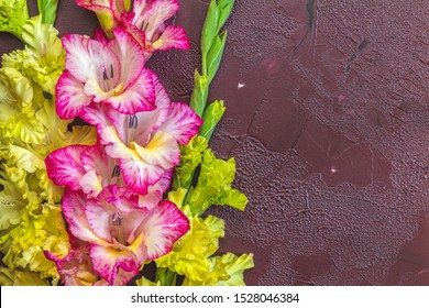 Border frame made of yellow and pink gladiolus flowers on claret concrete background. Pattern of gladiolus with space for your text, holiday greeting card