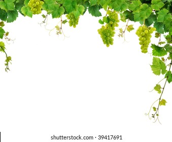 Border of fresh grapevine with ripe grapes