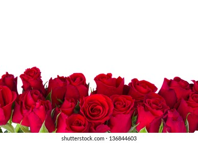 border  of fresh red garden roses  isolated on white background