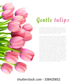 Border of Gentle Pink Tulips, fresh spring flowers bouquet isolated on white background