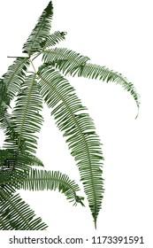Border of green fern leaf