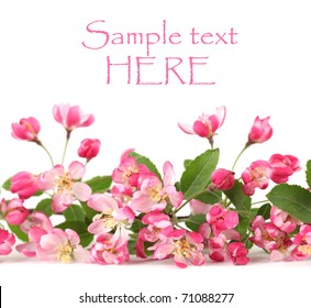 Border made of pink spring flowers isolated on white background